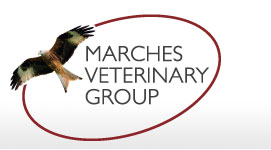 Marches Vets